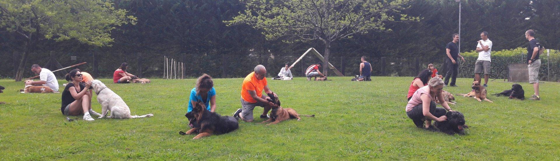 Adiestramiento y educación canina básica - Txakur Bai