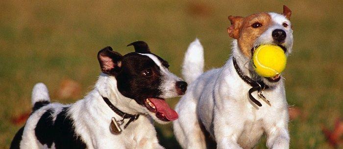 Hotel canino y residencia para perros en Bizkaia