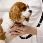 Curso de corrección de conducta canina
