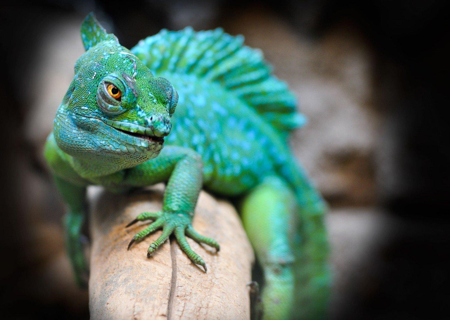 Hotel y residencia para reptiles