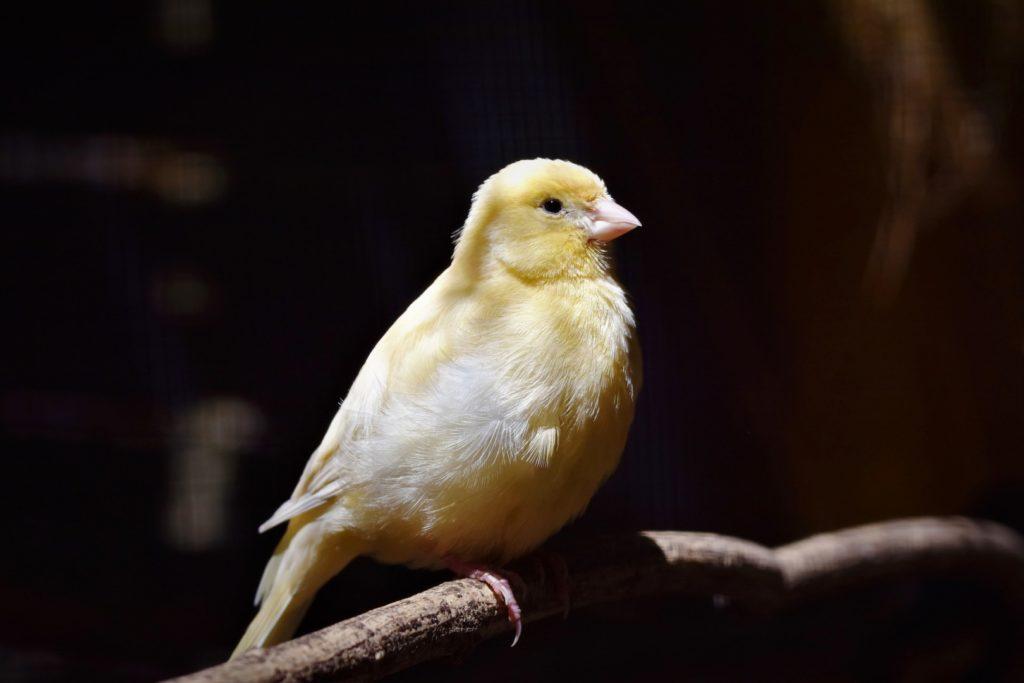 Hotel y residencia para aves y pájaros